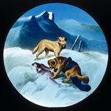 St Bernard dog rescuing an avalanche victim