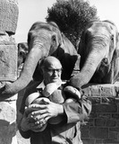 """""""Elephants with keeper, Chester Zoo, September 1977."""""""