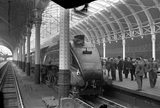 London and North Eastern Railway (LNER) A4 Pacific no. 60033 'Seagull',on th 8.30 Plymouth to Paddington train, 5th May 1948