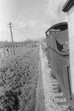 Yeo Mill Halt, Barnstaple train leaving. 7 April 1953