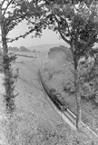 Bathealton Tunnel, looking east, 27 June 1953