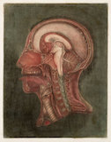 Print showing the internal structure of the human head and neck, France, 1748.