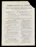 Phrenological Chart - Taken by Mrs Hamilton', published in England, 1830-1880.