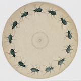 Phenakistoscope disc: crawling beetle