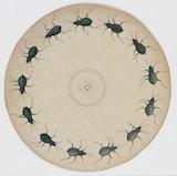 Phenakistoscope disc: crawling beetle