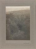 Landscape, Surrey Woods
