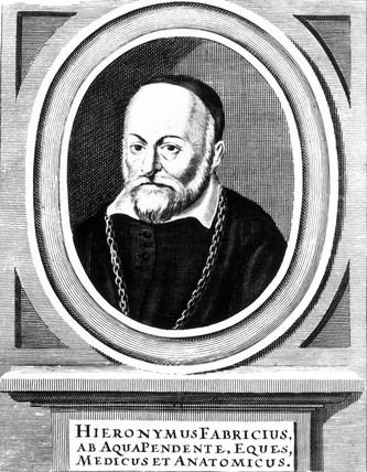 Hieronymus Fabricius, Italian anatomist,  late 16th century.