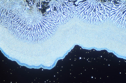 Colloidal silica, light micrograph, 1990s.