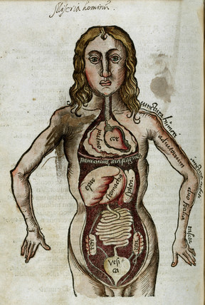 Figure of a man with his internal organs exposed, 1535.