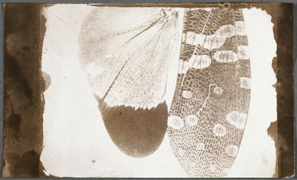 Insect wings, c 1840.