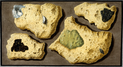 Specimens of tufa, c 1770.