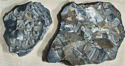 Rock fragments from Fosa Grande, Mount Vesuvius, c 1770.