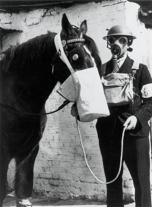Gas protection for horses, West Ham, London, 1939.