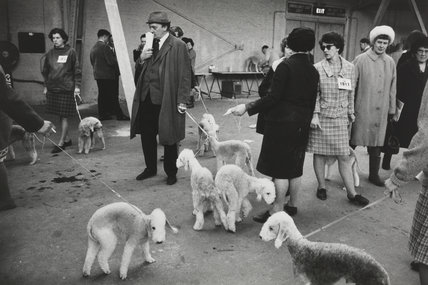 Cruft's Dog Show, London, 1968.