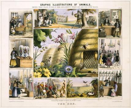 'The Bee', c 1845.