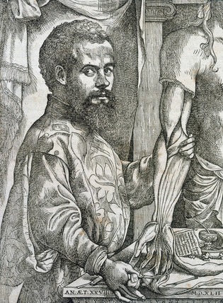 Vesalius disecting the muscles of the forearm of a cadaver, 1543.