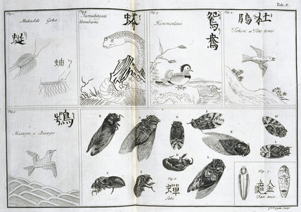 Birds and insects, c 1690.