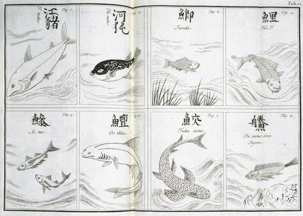 Fish, c 1690.