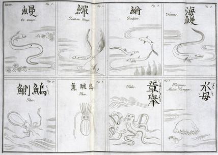 Sea creatures, c 1690.