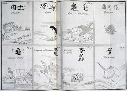 Amphibians and crabs, c 1690.