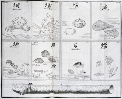 Crabs and shellfish, c 1690.