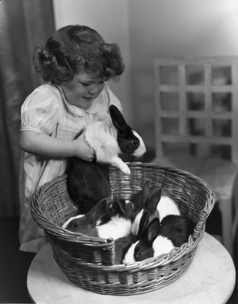 Young girl picking up one of four rabbits f