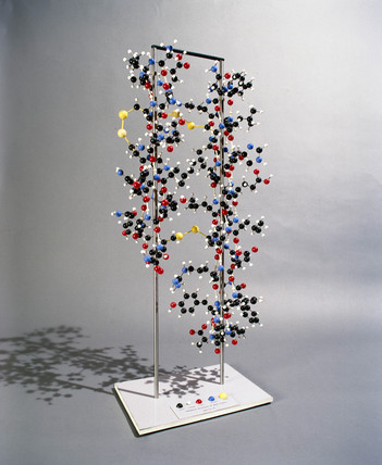 Molecular structure model of insulin, c 1965.