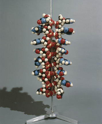 Ball and spoke model of DNA.