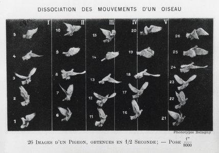 'Le vol des oiseaux' , 1890.