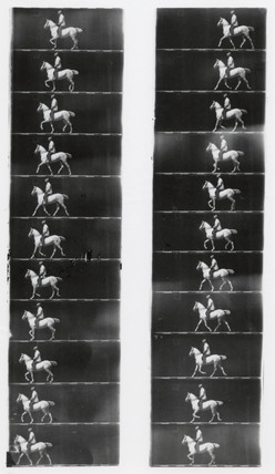 Chronophotographic pictures of a trotting horse, c 1893.