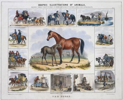 'The Horse', c 1845.