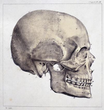 'Head', c 1815-1859.