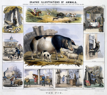 'The Pig', c 1845.