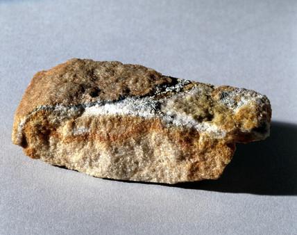 Antarctic sandstone sample containing micro-organisms.