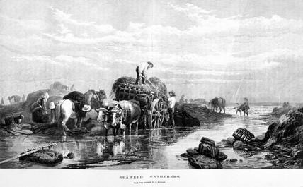 'Seaweed Gathering', 1874.