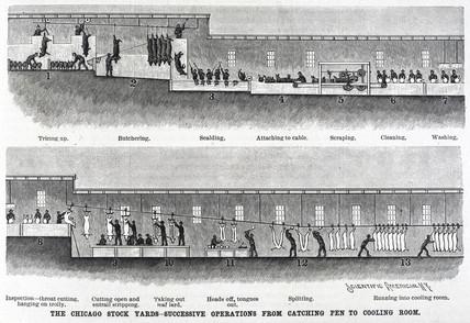 Hog killing at the Chicago Stock Yards, Ilinois, United States, 1891.