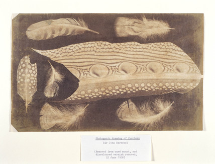 Feathers, c 1840.