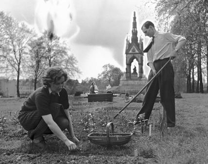 A couple gardening an allotment in Hyde Par
