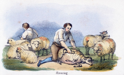 'Shearing', c 1845.