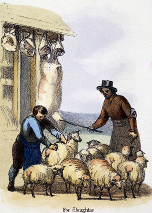 'For Slaughter', c 1845.