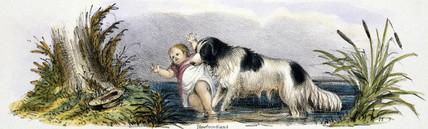 'Newfoundland', c 1845.