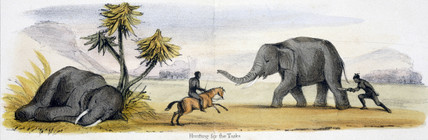 'Hunting for the Tusks', c 1845.