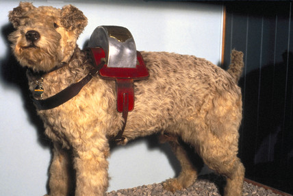 'Laddie', railway collecting dog, 1948.