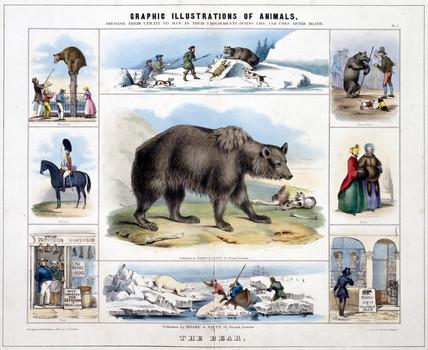 'The Bear', c 1845.
