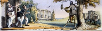 'Swarming', c 1845.