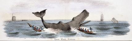 'Sperm Whale Fishery', c 1845.