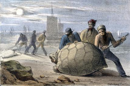 'Catching Turtles', c 1845.