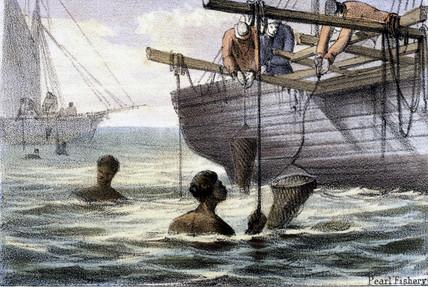 'Pearl Fishery', 1845.