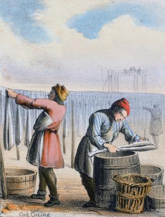 'Cod Curing', c 1845.