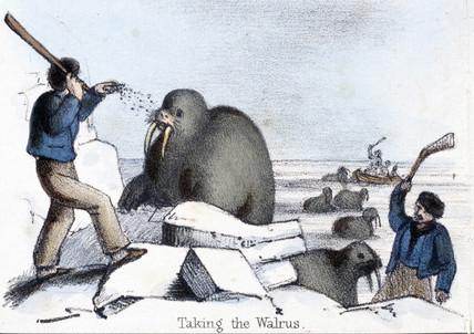 'Taking the Walrus', c 1845.